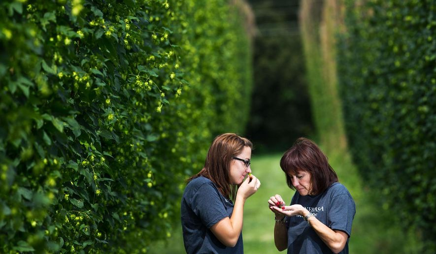 In this Wednesday, Aug. 19, 2015 photo, Jessie Nielsen, left, and Annette Wiles smell hops cones while posing for a portrait at the Nebraska Hop Yards in Plattsmouth, Neb. Bruce and Annette Wiles have launched three separate companies to capitalize on every aspect of hops, from growing the crop to processing and packaging it. (Chris Machian/Omaha World-Herald via AP) MAGS OUT; ALL NEBRASKA LOCAL BROADCAST TELEVISION OUT; MANDATORY CREDIT