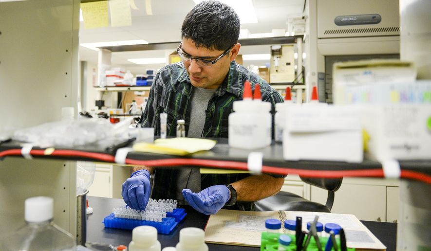 In this photo taken Thursday, Aug. 13, 2015, Reyes Murrieta, a Colorado State University graduate research assistant, tests mosquitos for the West Nile virus in Fort Collins, Colo. In the decade-plus since those early days of West Nile virus study, determining whether mosquitoes are positive for the potentially lethal virus has calmed remarkably. (Erin Hull/The Coloradoan via AP) MANDATORY CREDIT