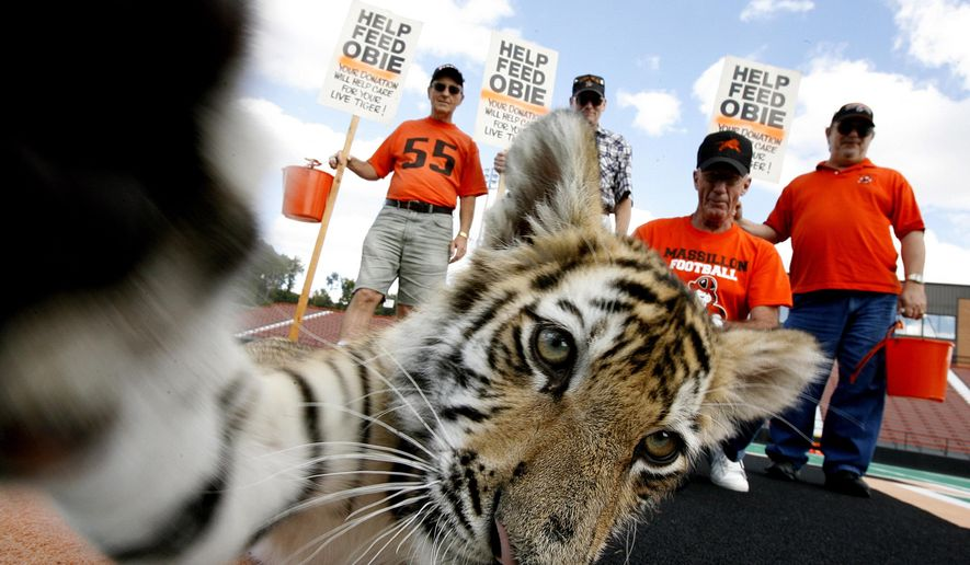 """FILE - In this Sept. 19, 2006, file photo, supporters of the football team at Washington High School in Massillon, Ohio, collect donations at the high school's Paul Brown Tiger Stadium to care for a tiger cub leased to serve as the team's mascot, """"Obie."""" The football team has had a live tiger cub mascot at games for decades, but the team's 2015 season may begin without a tiger cub at games unless state officials receive an affidavit required by Ohio's revised wildlife regulations enacted in 2012, attesting tiger cubs leased to serve as mascots will live at an accredited facility and be cared for throughout their lives. (Glenn B. Dettman/The Independent via AP, File)"""