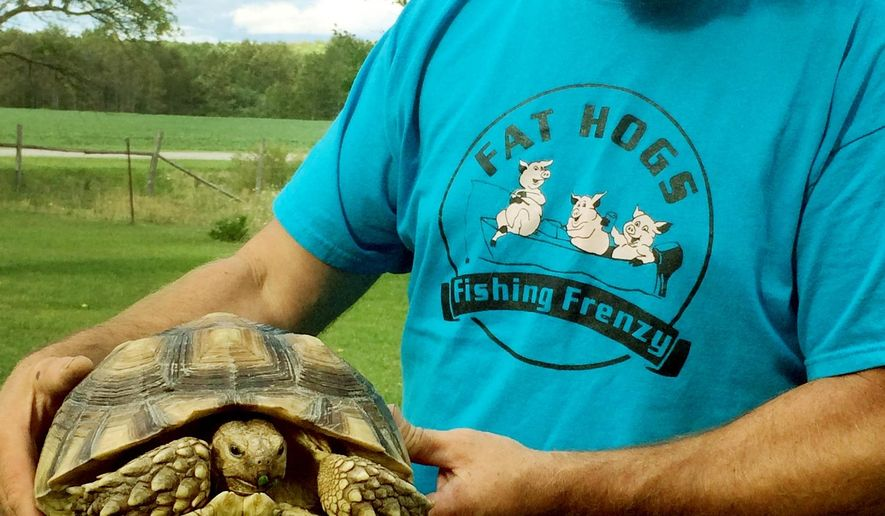 In this photo taken Aug. 20, 2015, Jode Paull holds an African spurred tortoise in Hawks, Mich. Paull discovered the tortoise on the side of the road recently. The animal is native to the southern edge of the Sahara desert and northern Africa. (Nicole Grulke/The Alpena News via AP) MANDATORY CREDIT
