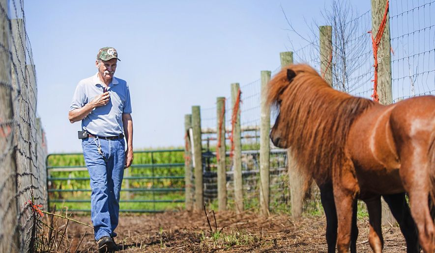 In this July 21, 2015 photo, Keith Elliott, a fifth generation farmer from Sycamore, Ill., smiles as he talks to his two miniature horses in their makeshift pen after the barn they lived in was burnt to the ground on his farm on July 5. That barn had weathered everything since 1835, but it was gone in a flash. Along with the barn, the Elliotts lost what was stored inside, including hay for their bison and miniature horses, the elevator that transferred it from the wagon to the barn, bison hides and an old-time harness for horses. (Danielle Guerra/Daily Chronicle via AP)  CHICAGO TRIBUNE OUT, MANDATORY CREDIT