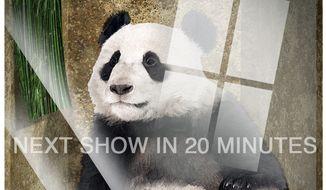 Illustration on the National Zoo pandas by Alexander Hunter/The Washington Times