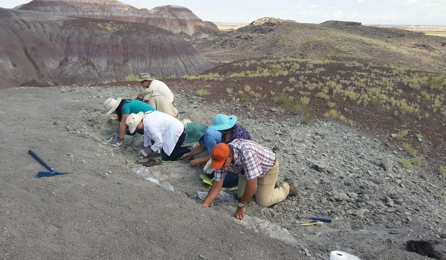 In this photo taken Saturday, Aug. 8, 2015 and released by the National Parks Service, a group of citizens digs for fossils at Petrified Forest National Park near Holbrook, Ariz. One of the amateur paleontologists discovered a jaw bone from a long-snouted fish that lived more than 220 million years ago. (National Park Service via AP)