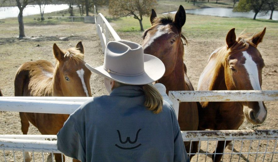 In this photo taken Dec. 4, 2003, Alice Walton checks on some of her young cutting horses on her ranch in Millsap, Texas. The Fort Worth Star-Telegram reports Walton, the Wal-Mart billionaire heiress, is putting her 1,432-acre ranch Rocking W Ranch west of Fort Worth up for sale. The asking price is $19,750,000. (Rodger Mallison/Star-Telegram via AP)  MAGS OUT; (FORT WORTH WEEKLY, 360 WEST); INTERNET OUT; MANDATORY CREDIT NO SALES