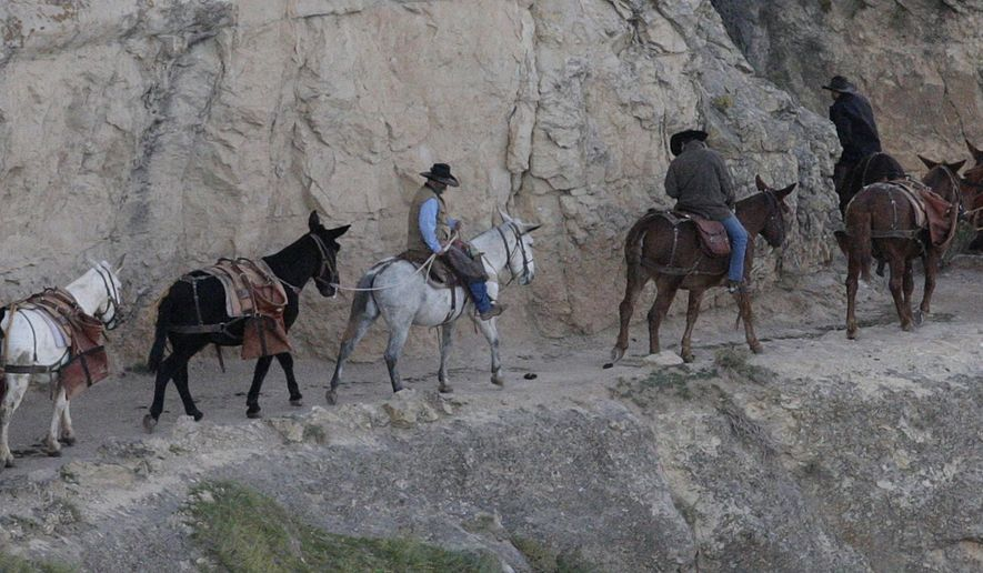 In this Oct. 22, 2012 photo, a mule team walks along the Bright Angel Trail on the South Rim of the Grand Canyon National Park in Ariz. Mobile food trucks, revamped lodges and possibly a valet service are coming to the Grand Canyon's South Rim under a new 15-year concessions contract. The park announced Thursday, Sept. 10, 2015,  that it has awarded the contract worth about $1 billion over its lifetime to Xanterra South Rim, LLC. (AP Photo/Rick Bowmer, File)