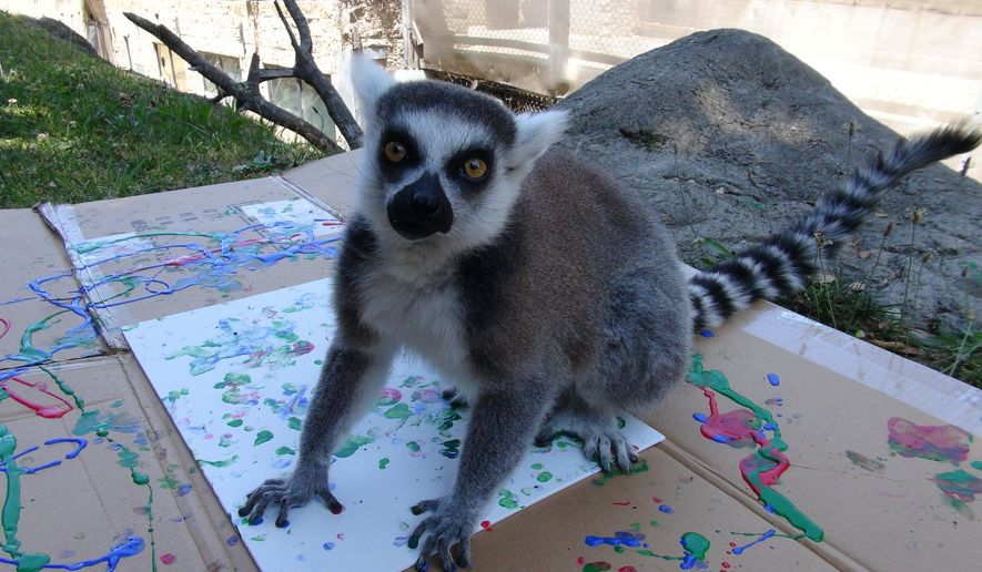 In this July 13, 2015, photo, Jennifer, a ring-tailed lemur, stands on a painting she created as part of an art show to raise funds for charity. Elephants, giraffes, goats, lemurs and even a cockroach at the Oakland Zoo produced abstract paintings in bright colors that will be auctioned on eBay starting Thursday. (Erin Dogan Harrison, The Oakland Zoo via AP)