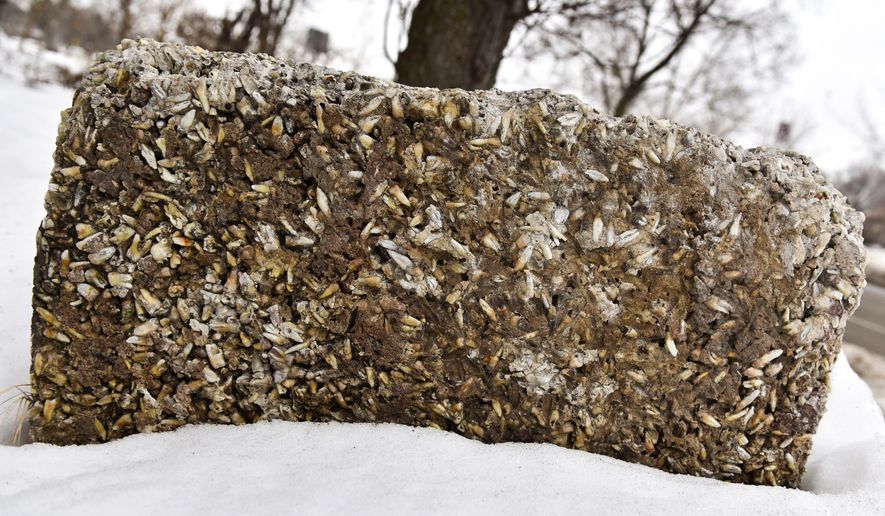 This Feb. 11, 2015 photo shows a side view of a cement block filled with teeth in Elkhart, Ind. Dr. Joseph Stamp, a dentist, first shaped the stone block in the '40s or '50s, Paul Thomas, Time Was Museum curator said. It was a memorial to Stamp's childhood dog, a German Shepherd named Prince, according to his granddaughter, Susan Howard. Neither Howard nor her three older brothers could say why Stamp filled the monument with teeth.  (Jennifer Shephard/The Elkhart Truth via AP) GOSHEN NEWS OUT; MANDATORY CREDIT
