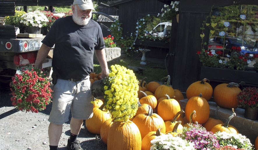 "Burr Morse, proprietor of Morse Farm Maple Sugarworks, moves mums at his business Friday, Sept. 18, 2015 in Montpelier, Vt. One of the hottest early Septembers on record is delaying the arrival of red, orange and yellow foliage that draws visitors to northern New England each fall. About 300 tour buses usually stop at Morse's during foliage season. Morse said the trees are beginning to ""blush, like an embarrassed schoolboy,"" and he expects the colors to be brilliant within the next week or two. (AP Photo/Wilson Ring)"