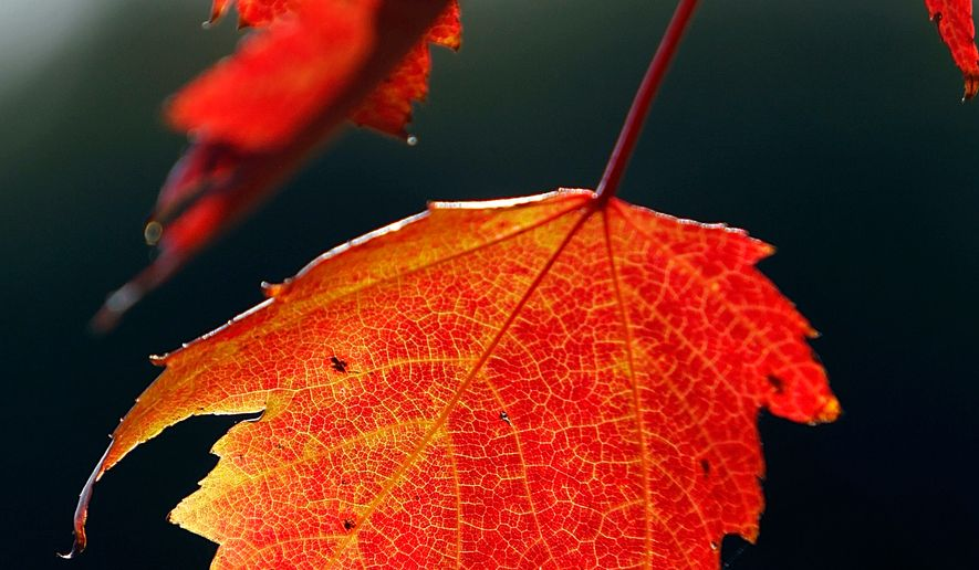 It's autumn. Savor the beauty of the season. (AP Photo/Toby Talbot, File)