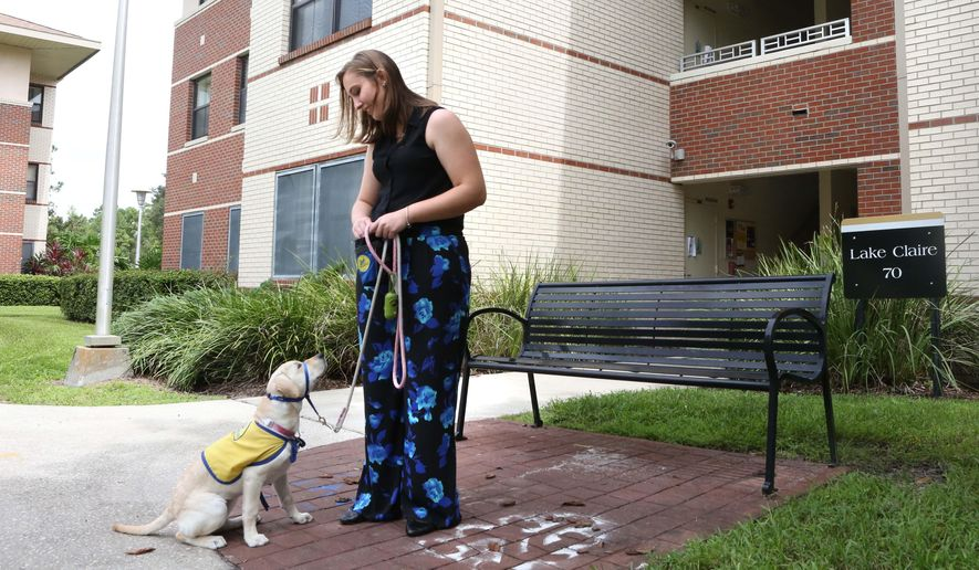 ADVANCE FOR THE WEEKEND OF SEPT 26-27 AND THEREAFTER  - In a Sept. 16, 2015 photo, Morgan Bell works with her puppy Robin outside her UCF Lake Claire dorm room in Orlando. She is helping to raise the puppy as a service dog.   (George Skene/Orlando Sentinel via AP)