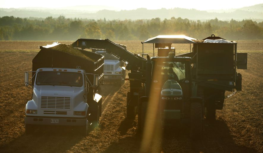 FILE - In this Sept. 25, 2014, file photo, a mechanical harvester fills trucks with potatoes in Mapleton, Maine. The bright sun is outshining the state's reputation for fickle weather as the potato harvest gets underway in earnest following an excellent growing season for 2015, potato farmers said. (AP Photo/Robert F. Bukaty, File)