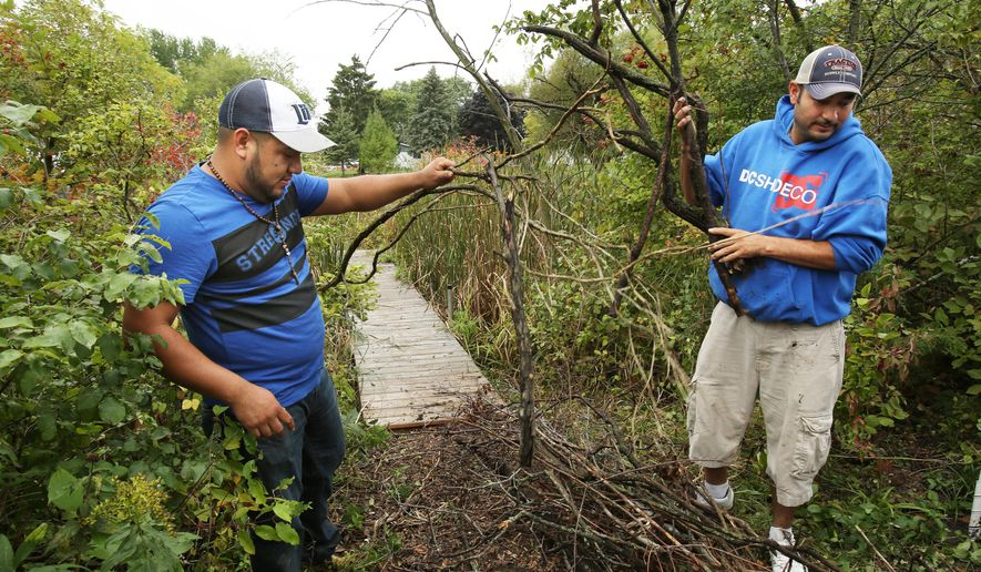 ADVANCE FOR USE SATURDAY, SEPT. 26 - In this photo taken Friday, Sept. 18, 2015, David Gomez, left, and Jacob Delao, both employees at the Johnsonville Sausage plant in Watertown, help clear brush during a restoration project at Heiden Pond in Watertown, Wis. The work by the co-workers is an effort by Johnsonville to retain the 120 employees at its Watertown plant as the company rebuilds its operations after a fire destroyed the factory. So instead of losing the workers, Johnsonville is keeping them busy in the community and maintaining their pay and benefits. (Amber Arnold/Wisconsin State Journal via AP) MANDATORY CREDIT