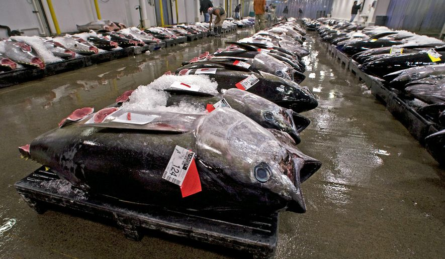 FILE - In this May 12, 2009, file photo, bigeye tuna line the floor of the United Fishing Agency's auction house in Honolulu. Environmentalists want a federal judge to stop the National Marine Fisheries Service from allowing Hawaii-based fishermen to attribute some of their bigeye tuna catch to U.S. territories. (AP Photo/Eugene Tanner, File)
