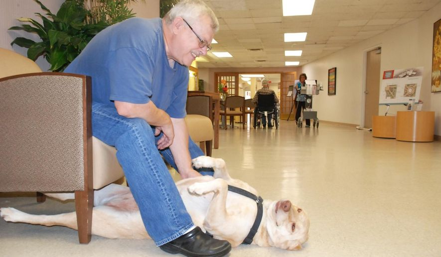 In this photo taken Sept. 14, 2015,  Roger Randall gives Bella a massage in Fremont, Neb. Bella was a rescued stray, who's become a friend to residents and staff at the hospital and care center. Randall is a Fremont man, who had to relearn basic tasks like walking and using his left and right hands after strokes damaged his brain nearly seven years ago. Together, they attract smiles and friendly comments from passersby. (Tammy Real-McKeighan/The Tribune via AP) MANDATORY CREDIT