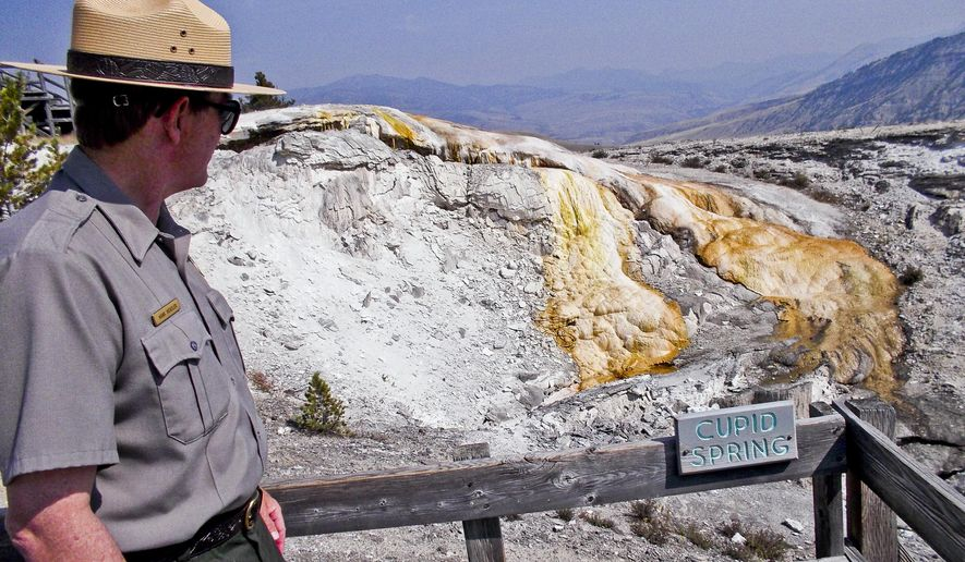 ADVANCE FOR RELEASE SATURDAY, SEPT. 26, 2015, AT 3:00 A.M. MDT. AND THEREAFTER -  In this Aug. 24, 2015 photo, Yellowstone National Park geologist Hank Heasler looks at Cupid Spring, one of the more active thermal features in the Park, near the most recently discovered spring, on Upper Terrace Drive at Mammoth Hot Springs. Last April, Yellowstone National Park officials noticed a new spring on Upper Terrace Drive near a popular parking lot that overlooks a white and gray travertine plateau sloping down to the traffic jam in Mammoth, Wyo. (Michael Wright/Bozeman Daily Chronicle via AP) MANDATORY CREDIT