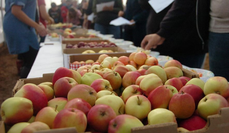 ADVANCE FOR USE SATURDAY, SEPT. 26 - FILE - In this Sunday Sept. 20, 2015, file photo, apple samplers walk past several varieties as they score them during an apple tasting at O'Brien Garden and Trees in Nikiski, Alaska. (Megan Pacer/Peninsula Clarion via AP) MANDATORY CREDIT