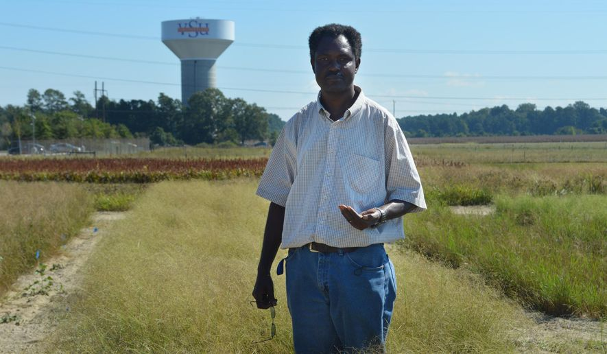 ADVANCE FOR SATURDAY, SEPT. 26, 2015, AT 9:00 A.M. EDT - Vitalis W. Temu, a professor at Virginia State University, poses for a portrait in a field of Eragrostis tef - more commonly called teff grain - at the university's Agricultural Research Station in Ettrick, Va., on Sept. 18, 2015. Temu is researching the grain production of teff to see if it could be a profitable crop in Virginia. (Shelby Mertens/The Progress-Index via AP) MANDATORY CREDIT