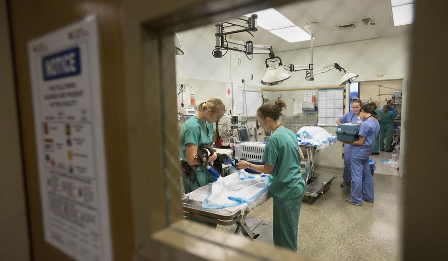 In this Thursday, Sept. 24, 2015 photo, UC Davis veterinarians treat cats who were burned in the Valley and Butte fires, at the UC Davis Veterinary Medical Teaching Hospital in Davis, Calif. (Randy Pench/The Sacramento Bee via AP)