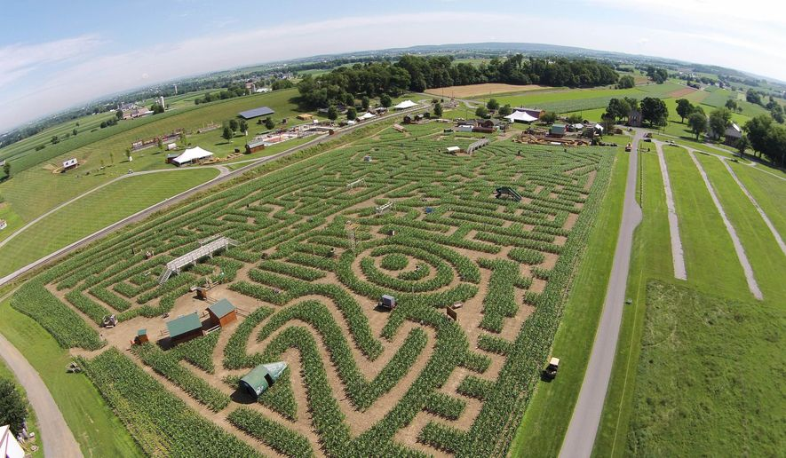 This Thursday, June 25, 2015, photo shows the Cherry Crest Adventure Farm in Ronks, Pa., including partial growth of a corn maze named the Amazing Maize Maze that has been built on the farm every year since 1995. The farm's corn maze, marking its 20th anniversary in 2015, is open on selected dates from Saturday, July 4, 2015, through Saturday, Nov. 7, 2015. (Keith Schweigert/LNP via AP)