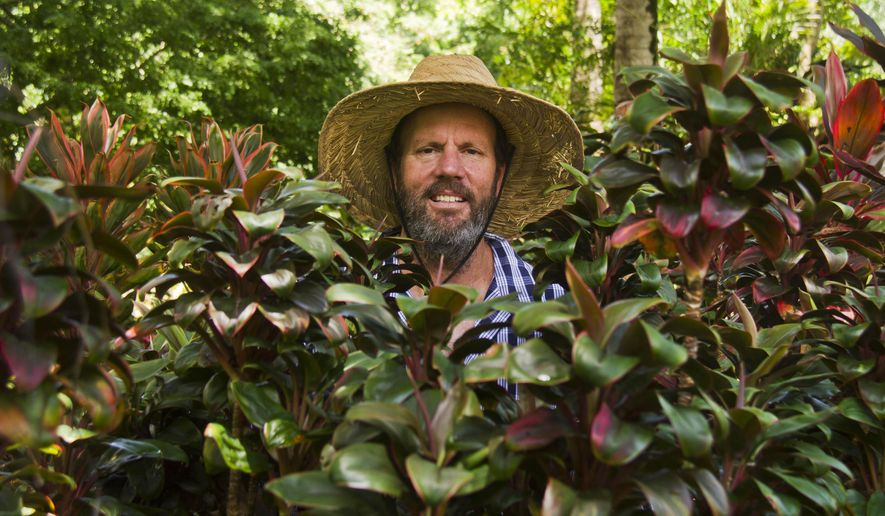 """ADVANCE FOR WEEKEND - David Yearian, a ti leaf expert who cultivates his own ti leaf varieties and other hybrids, poses in his extensive garden in Waimanalo, Hawaii on August 27, 2015. Known islandwide as """"the ti guy,"""" Yearian, 53, has been specializing in creating hybrids of ti, or Cordyline fruticosa, for the past 30 years. The self-taught gardener has created at least 300 varieties over the decades, using a small paintbrush to cross-pollinate and coax out new colors, textures and combinations.  (Dennis Oda/Honolulu Star-Advertiser via AP)"""