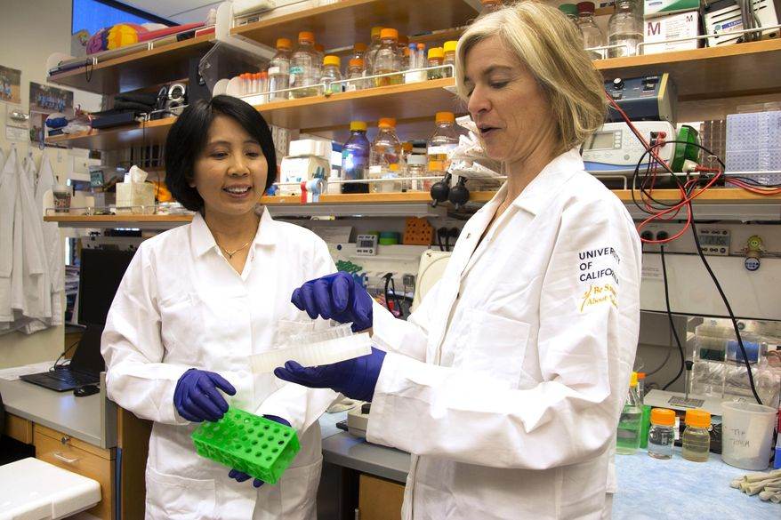 """FOR RELEASE FRIDAY, OCT. 9, 2015, AT 3:00 A.M. EDT - In this photo provided by UC Berkeley Public Affairs, taken June 20, 2014 Jennifer Doudna, right, and her lab manager, Kai Hong, work in her laboratory in Berkeley, Calif. The hottest tool in biology has scientists using words like revolutionary as they describe the long-term potential: wiping out certain mosquitoes that carry malaria, treating genetic diseases like sickle-cell, preventing babies from inheriting a life-threatening disorder. """"We need to try to get the balance right,"""" said Doudna. She helped develop new gene-editing technology and hears from desperate families, but urges caution in how it's eventually used in people. (Cailey Cotner/UC Berkeley via AP)"""