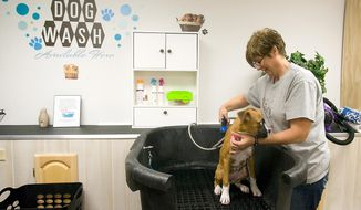In this Sept. 16, 2015 photo, Kimberly Adams, owner of Sudzy Bath & Biscuits, prepares to give a boxer puppy a bath at her business in Anna, Ill. The all-in-one pet store has daycare and boarding for dogs, baths, treats and grooming available. Adams said the store opened in July and it has already taken off better than she anticipated. (Richard Sitler/The Southern Illinoisan via AP)