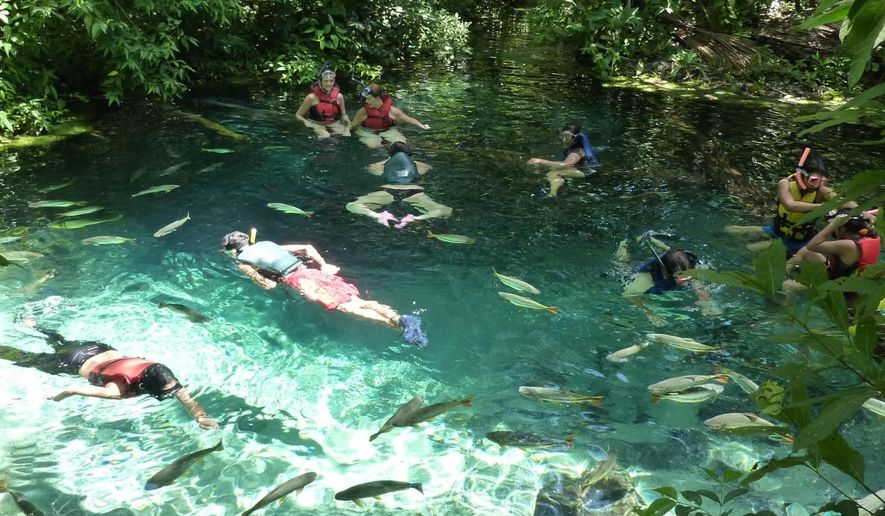 Tourists visit with the 'piraputanga' fish in a tributary of the Cuiabá River in Mato Grosso, Brazil (Benjamin Geffroy)