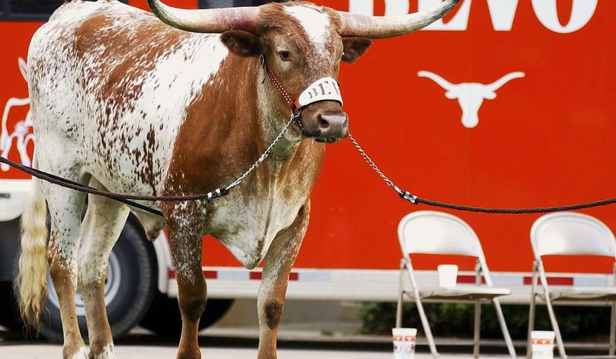 FILE - In this Saturday, Sept. 4, 2004 file photo, Bevo XIV, the newest mascot of the University of Texas Longhorns makes his debut at the football game in Austin, Texas. The University of Texas says longhorn steer mascot Bevo XIV has been diagnosed with cancer and will retire, Tuesday, Oct. 13, 2015. (AP Photo/Harry Cabluck, File)