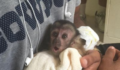 Animal rights group PETA has called on Texas animal control authorities to investigate Dallas Cowboys star receiver Dez Bryant for owning a pet monkey. (Instagram/@dezbryant)