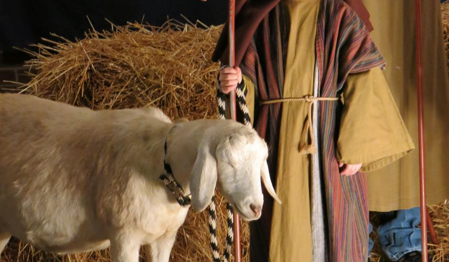 This undated photo provided by Lazy JV Ranch shows,  Cottonball, a purebred Nubian goat from Lazy JV Ranch with her shepherd in a nativity scene at the Cumberland Presbyterian Church in Owensboro, Ky. Rented farm animals and reindeer are in high demand during the weeks between Thanksgiving and Christmas for Christmas pageants and other seasonal celebrations. (Courtesy Jan Catron/Lazy JV Ranch via AP)