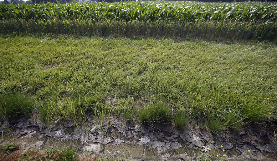 "FILE - In this June 11, 2015 file photo, a dry water ditch is seen next to a corn field in Cordova, Md. The White House on Tuesday threatened to veto a Senate bill that would block new federal rules to protect smaller streams, tributaries and wetlands from pollution and development. Senators are voting Tuesday on whether to consider the bill. Most Democrats are opposed to the legislation, saying that the Obama administration rules will safeguard drinking water for 117 million Americans and should remain in place. The White House said the regulations are ""essential to ensure clean water for future generations."" (AP Photo/Alex Brandon, File)"