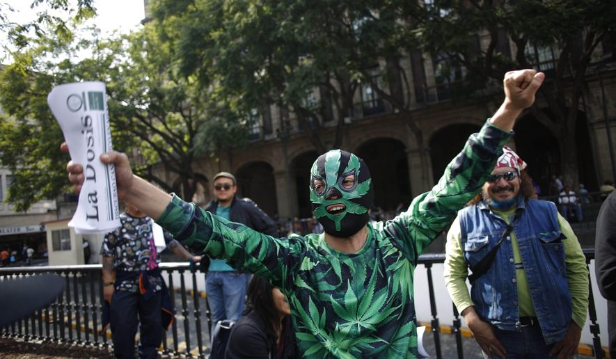 A supporter of the legalization of marijuana wears a Lucha Libre wrestling mask decorated with a marijuana leaf, as he celebrates outside the Supreme Court in Mexico City, Wednesday, Nov. 4, 2015. Mexico's court ruled Wednesday that growing, possessing and smoking marijuana for recreation are legal under a person's right to personal freedoms. (AP Photo/Eduardo Verdugo)