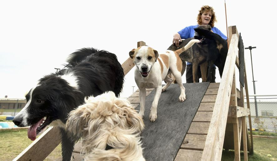 In this Oct. 20, 2015 photo, Linda Marini, co-owner of Play and Stay Dog Lounge plays with dogs on the playground equipment at her business in Ottawa, Ill. Doggie day care is becoming more popular in Starved Rock Country as families seek to engage their dogs while they are at work and school. (The Times/Doug Larson) (Doug Larson/The Times via AP)