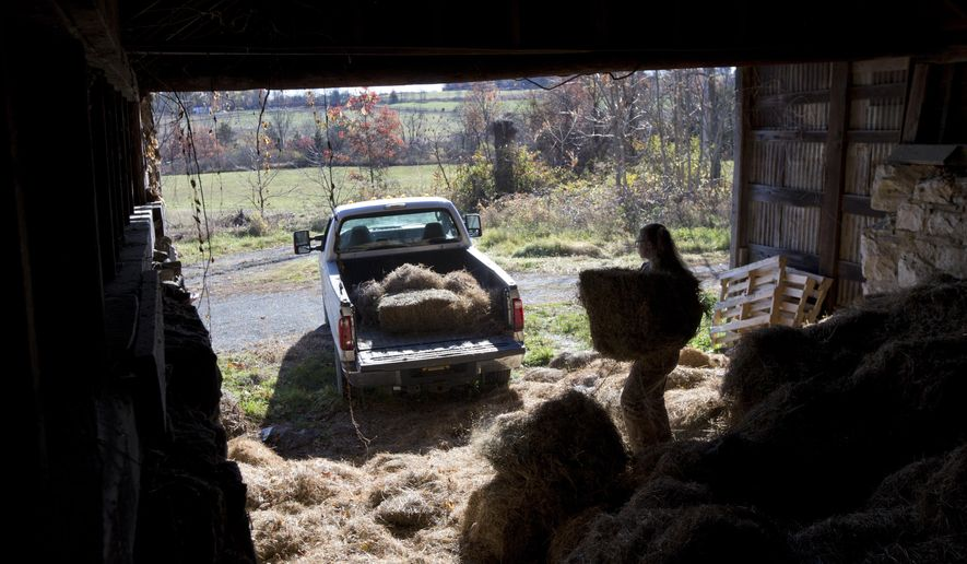 In this Friday, Oct. 30, 2015, photo, Leanna Mulvihill loads hay onto a pickup truck at the Hudson Valley Farm Business Incubator in New Paltz, N.Y. The incubator provides young farmers like Mulvihill with guidance, farm equipment and below-market rents for three years to help them get on their feet. (AP Photo/Mike Groll)