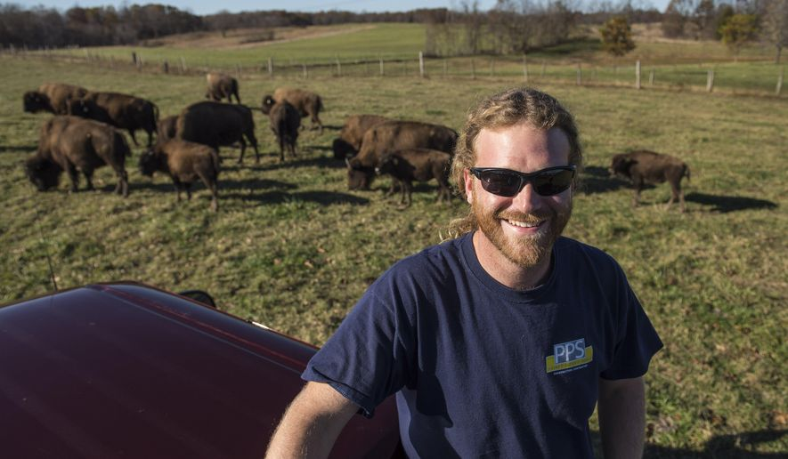 In this photo taken Nov. 3, 2015, bison graze behind Zach Martin on his ranch near Solsberry, Ind. Martin owns around 60 bison, 225 acres of Greene County land and a Bloomington storefront under the name Red Frazier Bison. (Chris Howell/The Herald-Times via AP)
