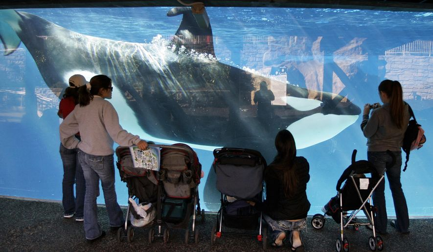 In this Nov. 30, 2006, file photo, people watch through glass as a killer whale swims by in a display tank at SeaWorld in San Diego. A SeaWorld executive says orca shows at the company's San Diego park will end by 2017. CEO Joel Manby cited customer feedback as the reason for the move in an announcement Monday, Nov. 9, 2015, to investors. Manby said the park would offer a different kind of orca experience and focus on the animal's natural setting and behaviors. (AP Photo/Chris Park, File)