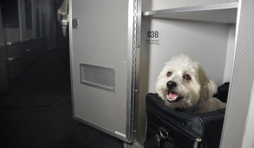American airlines allows pets in first class on some trans for Airlines that allow dogs in cabin