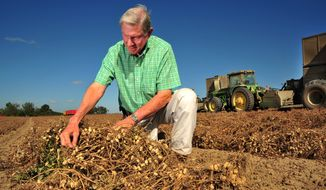 Peanut grower Armond Morris examines peanuts ready for harvest at his Irwinville, Ga., farm. (Associated Press)