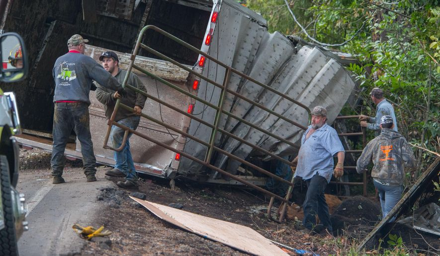 Workers remove barriers that funneled surviving cattle out through the trailer's roof at the scene of the crash east of Springfield, Ore. Tuesday, Dec, 1, 2015. At least 12 cows died after a semi-truck pulling a trailer of cattle crashed and flipped over on McKenzie Highway near Cedar Flat Road, closing the highway for several hours. (Brian Davies/The Register-Guard via AP) MANDATORY CREDIT
