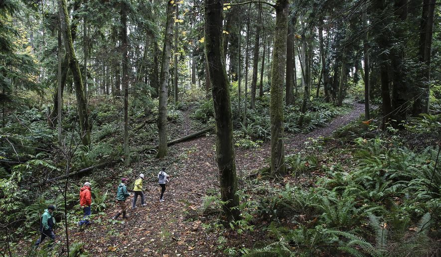 In this photo taken on Nov. 6, 2015, Joseph Cospito from left to right, Gregg Lungren, Todd Zackey, Joan Smith and Emily Mydynski make their way out of the ravine after giving Zackey a tour in Edmonds, Wash. The old growth parcel is under proposal for high density development. (Kevin Clark /The Herald via AP) MANDATORY CREDIT