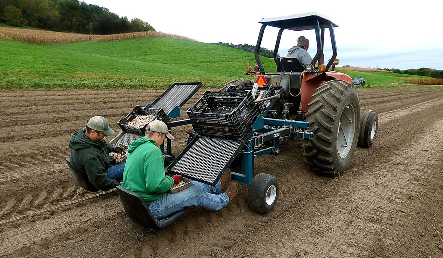 ADVANCE FOR RELEASE SATURDAY, DECEMBER 12, 2015, AT 12:01 A.M. CST. AND THEREAFTER - In this Oct. 4, 2015, file photo, Jason Hovell, left, and Dan Lilla plant next season's garlic crop at Tamarack Garlic Farm near Trempealeau, Wis. The farmers started Tamarack Garlic Farm in the fall of 2014 and this year harvested their first crop. (Nate Jackson/The Eau Claire Leader-Telegram via AP) MANDATORY CREDIT