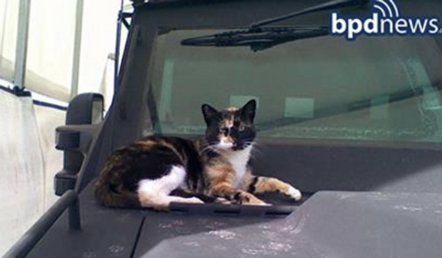 "The Boston Police Department's ""SWAT Cat"" has been missing for weeks. (Image: BPDNews)"