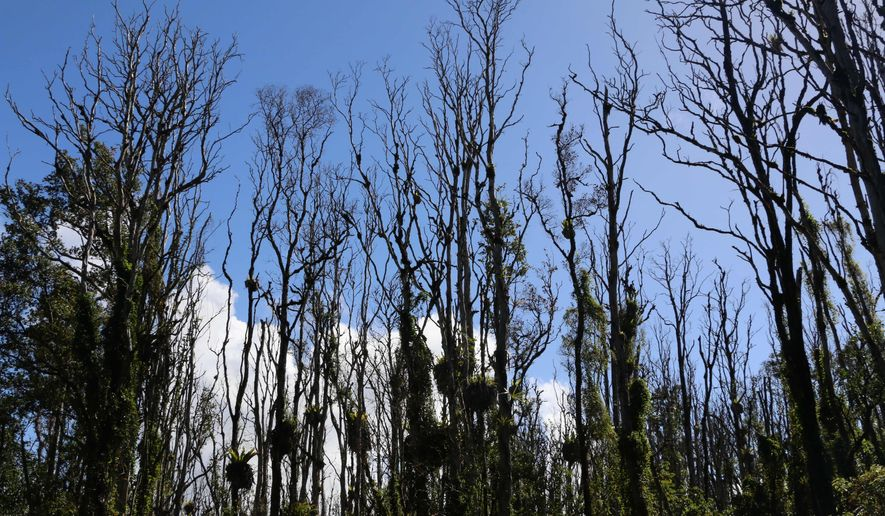 This Dec. 17, 2015 photo provided by the Hawaii State Department of Land and Natural Resources shows ohia lehua trees hit by the rapid ohia death fungus in Pahoa, Hawaii. A newly discovered fungus is killing a tree that's critical to Hawaii's water supply and feeding endangered native birds. (Hawaii State Department of Land and Natural Resources via AP)