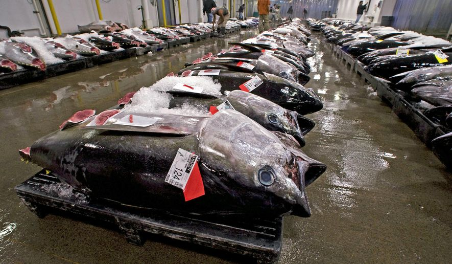 FILE - In this May 12, 2009, file photo, bigeye tuna line the floor of the United Fishing Agency's auction house in Honolulu. A federal judge has ruled longline fishermen in Hawaii may continue catching more bigeye tuna, or ahi, than the maximum set by international regulators. U.S. District Judge Leslie Kobayashi on Wednesday, Dec. 23, 2015, issued a ruling rejecting environmental groups' claims that the extra fishing is illegal. (AP Photo/Eugene Tanner, File)