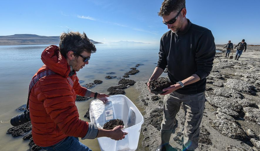 Tim Lee, left, an exhibit designer with the Natural History Museum gathers microbialites with geologist Mike Vanden-Berg along the shores of The Great Salt Lake, Nov. 16, 2015. The small rock like structures formed by cyanobacteria, offer a glimpse of what the Earth was like for its first 3 billion years. (Francisco Kjolseth/The Salt Lake Tribune via AP) LOCAL STATIONS OUT; MAGS OUT; DESERET NEWS OUT; MANDATORY CREDIT