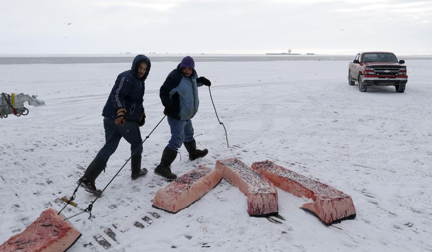 FILE - In this Oct. 7, 2014 file photo, men haul sections of whale skin and blubber, known as muktuk, as a bowhead whale is butchered in a field near Barrow, Alaska. The environment is changing and the Inuit, who consider themselves a part of it, want measures taken to protect their culture. (AP Photo/Gregory Bull, File)
