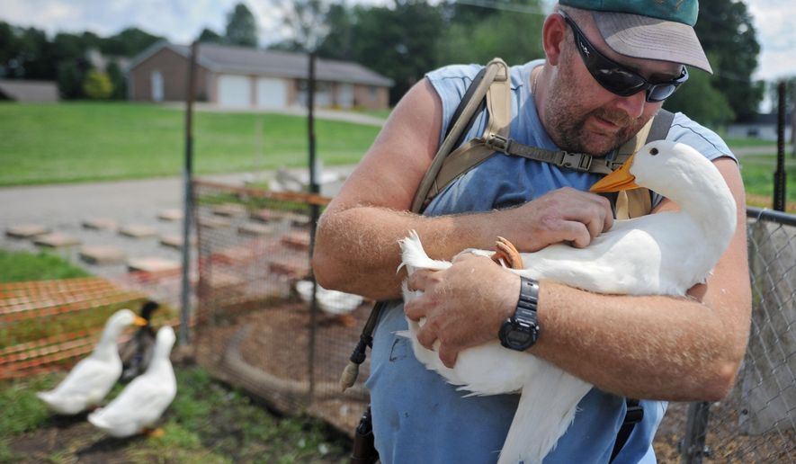 FILE - In this July 10, 2014, file photo, Iraq war veteran Darin Welker holds one of his ducks at his home in West Lafayette, Ohio. On Wednesday, Dec. 30, 2015, the Ohio Supreme Court declined to hear Welker's appeal, after he was convicted of a minor misdemeanor for violating a ban on keeping most farm animals. Welker argued that the pet ducks help relieve his post-traumatic stress disorder and depression. (Trevor Jones/The Tribune via AP, File) MANDATORY CREDIT