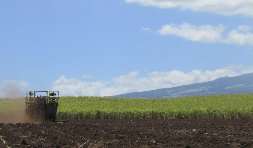 FILE - This April 27, 2010 file photo shows the Hawaiian Commercial & Sugar plantation in Puunene, Hawaii. Hawaii's last sugar plantation is getting out of the sugar-growing business. Alexander & Baldwin Inc. said Wednesday, Jan. 6, 2016, that it will phase out sugar by the end of 2016. (AP Photo/Audrey McAvoy, File)