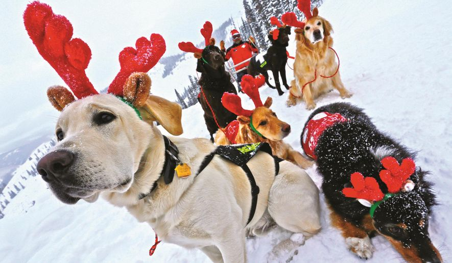 "In this December 2014 photo, ski patrol dogs of Crested Butte Mountain Resort wear antlers, with ski patroller Chris ""Buck"" Myall dressed as Santa, in Crested Butte, Colo. The dogs search for missing or buried skiers. Even if no one is buried in an avalanche, a dog team will go and get started on a search since time is so crucial. (Chris Segal/Crested Butte Mountain Resort via AP)"