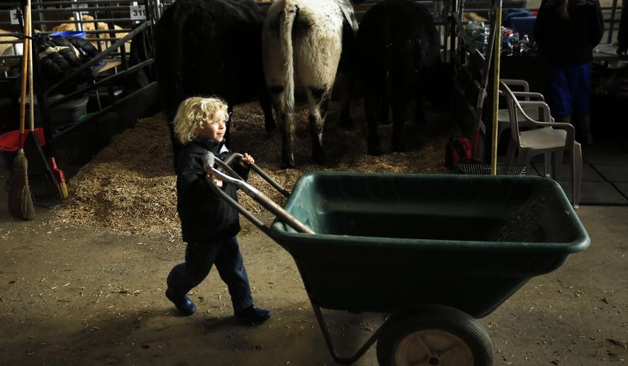 Ben Gruber, 5, of Auburn, Pa. moves a wheelbarrow by his familys' cows Thursday, Jan. 7, 2016, at the Farm Show complex in Harrisburg, Pa. Starting Saturday, thousands of visitors are expected to descend on the state capital for the 100th Pennsylvania Farm Show, a weeklong celebration agriculture and rural life.  (AP Photo/Matt Rourke)